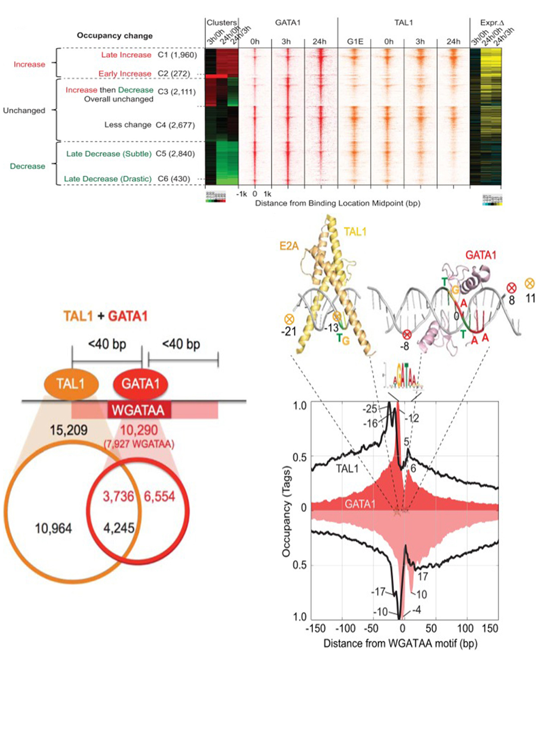 Genome-Wide Organization of GATA1 and TAL1 Determined at High Resolution. Pugh BF, Hardison RC, Mahony S